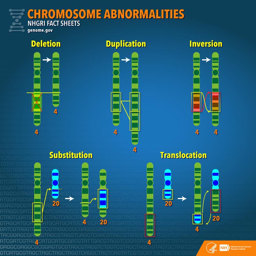 Chromosome_abnormalities_factsheet