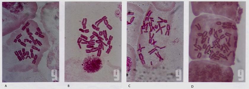 i9 Allium Tests